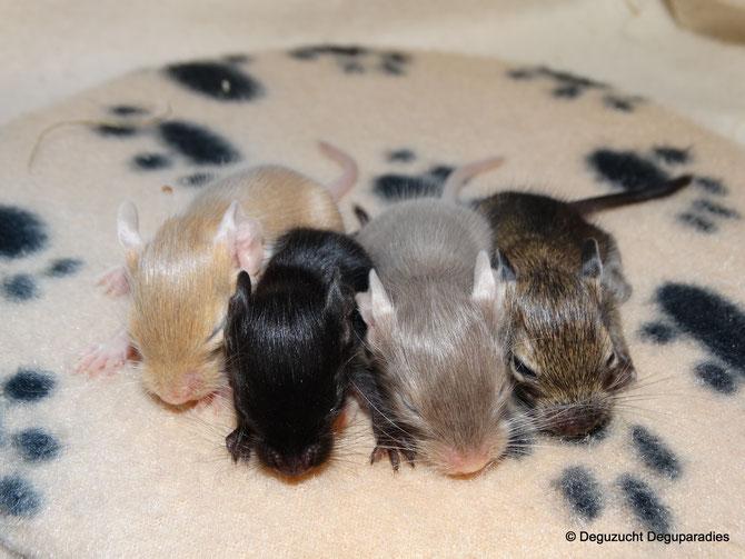 von Links: Lucy, Leroy, Lola & Lando