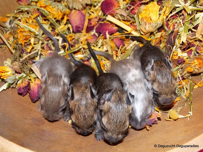Von links: Pia, Pius, Pauli, Pinu & Paula