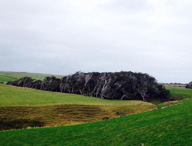 Verrückte Bäume!