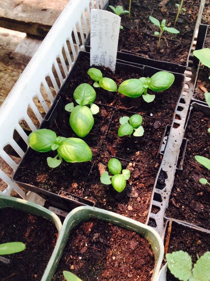 Baby Pflanzen