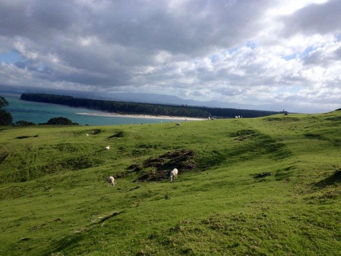 Schafe und Beach im Hintergrund