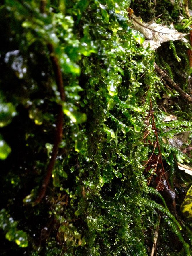 Wassertropfen an grünen Wänden