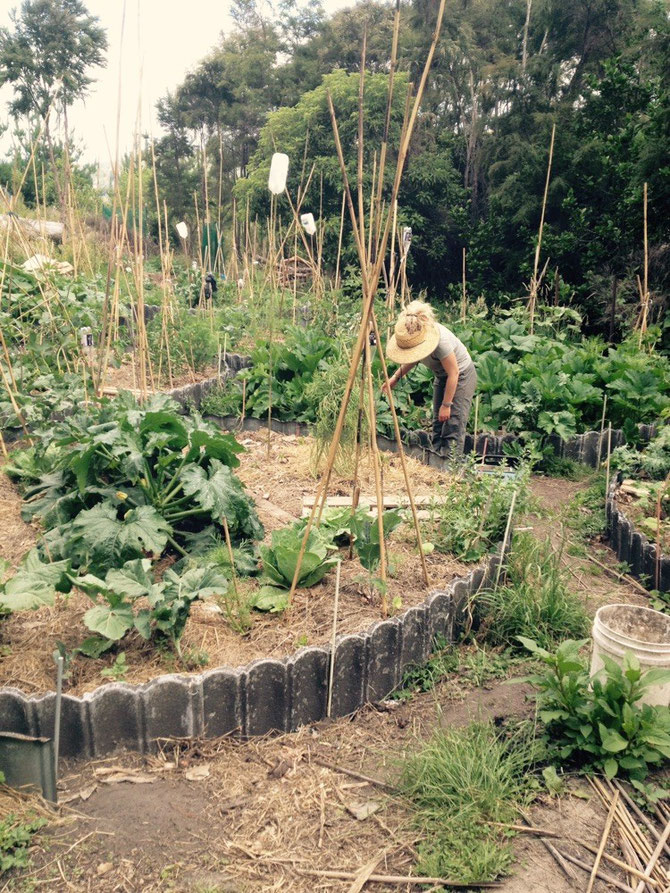 Veggie-Garten