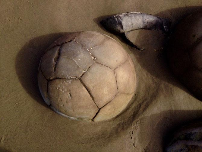 Ein natürlicher Fußball!