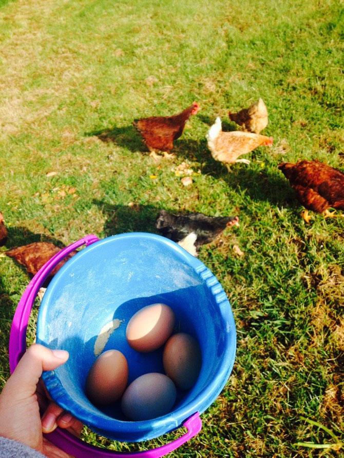 Eier sammeln!