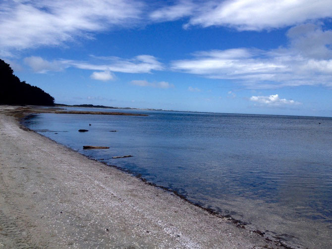 Letzter View auf Farewell Spit! Das Zipfelende von Golden Bay