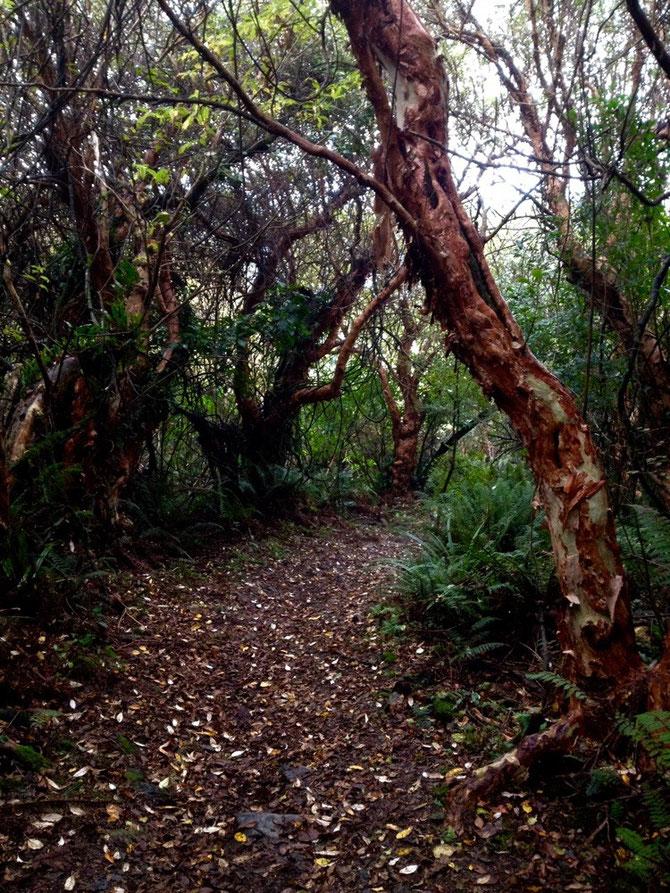 Tropische Bäume