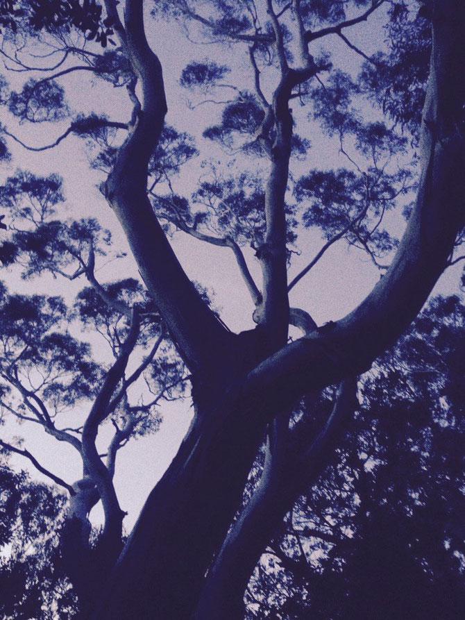 Der Baum macht Kunst!
