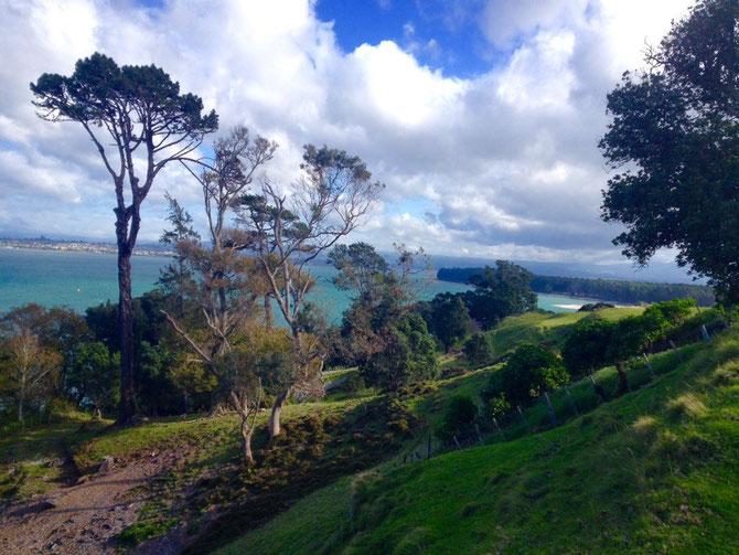 Picton like - aber es ist Mt Maunganui!