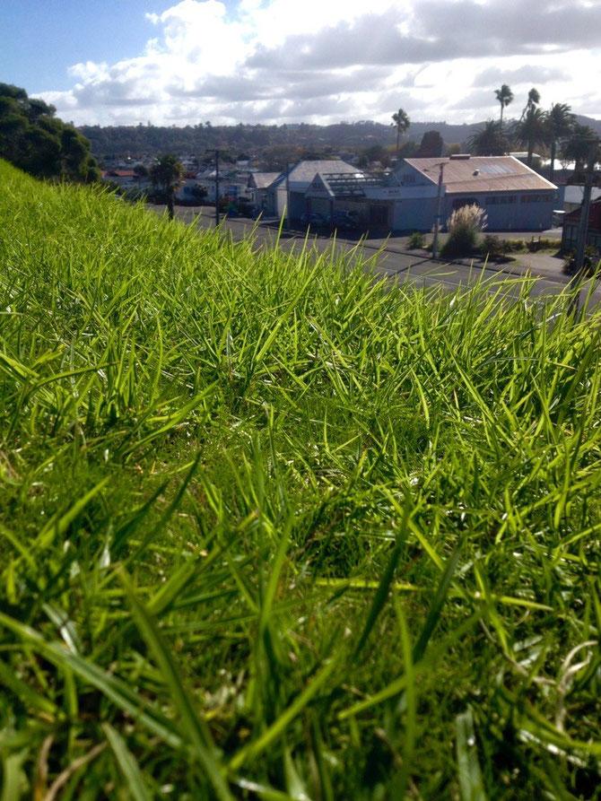 Schaut mal wie grün das Gras jetzt ist!