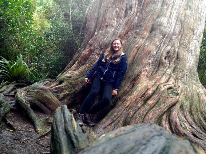 Der Größte Baum!