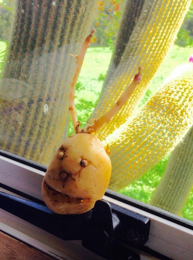 Wenn schon kein Halloween, dann eben ein Kartoffel-Teufel!