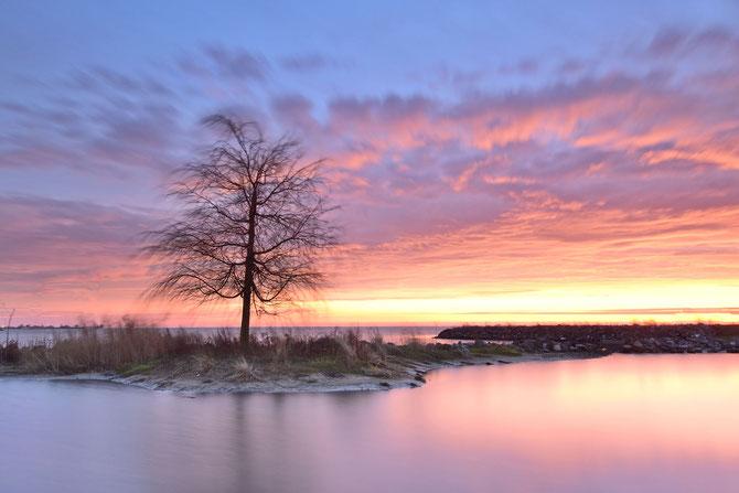 537. Alleenstaande boom bij zonsopkomst (0239)