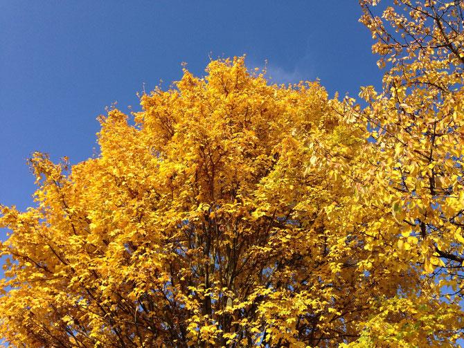 Gelb (Feldahorn) und Blau (Himmel)
