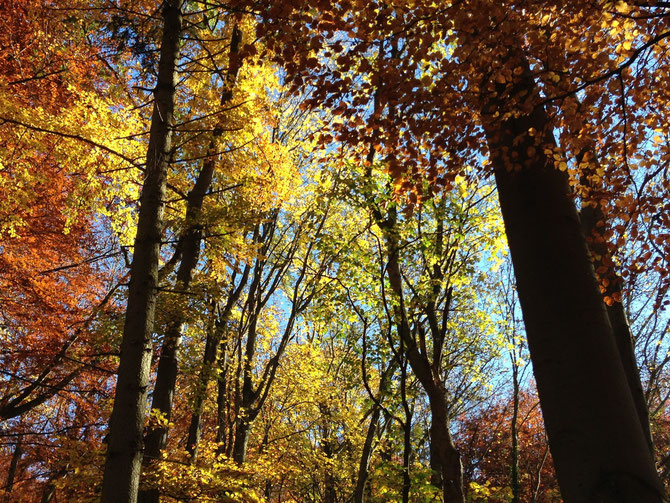 Bunter Laubwald, dunkles Holz
