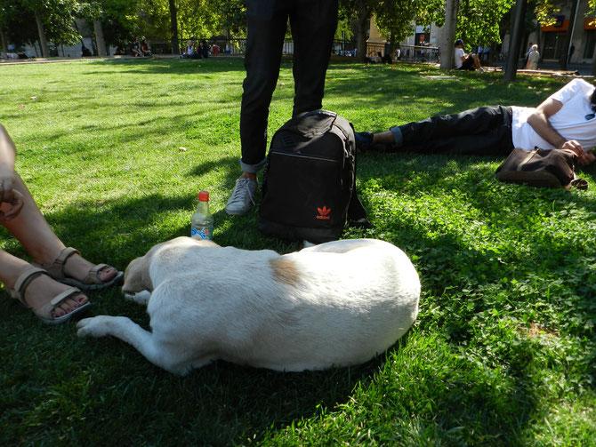 Unser tierischer Begleiter bei der Stadtführung