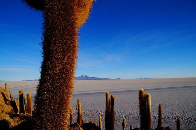 Blick auf einen Teil der Wüste von er Incahuasi-Insel aus