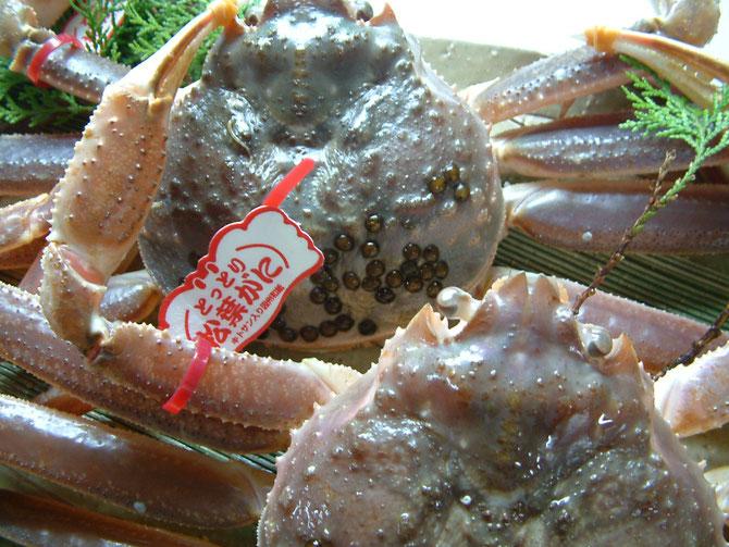 松葉蟹プラン