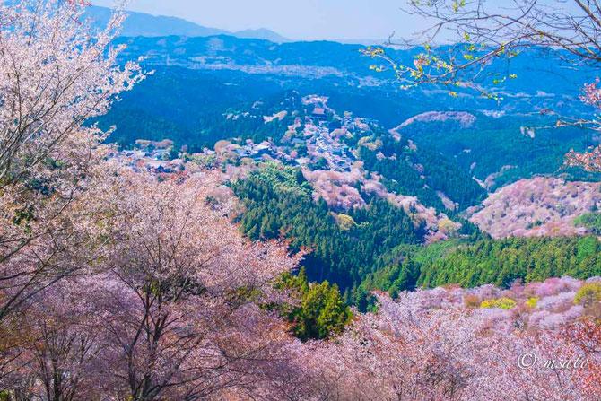 Fotografando sakura pelas províncias de Mie e Nara. Montanha Yoshino - Nara