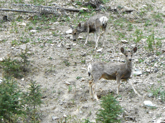 Found these deer, right outside my back door!  We watched them for a good half hour.  Love them!