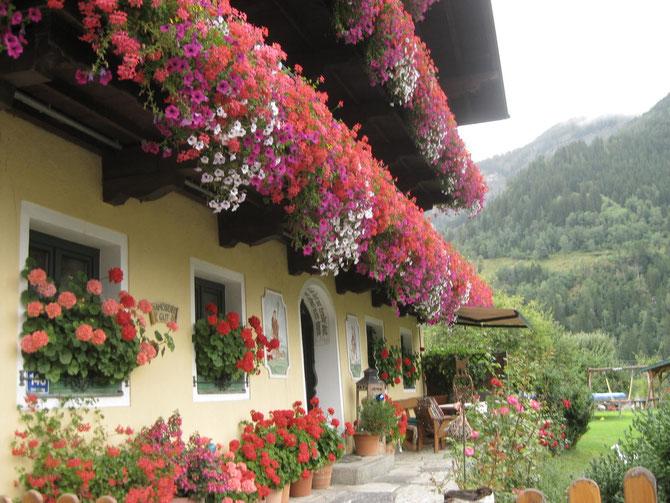 Diese Aufnahme habe ich in Österreich gemacht. Ich finde es hübsch, wenn es so bunt und prächtig ist.