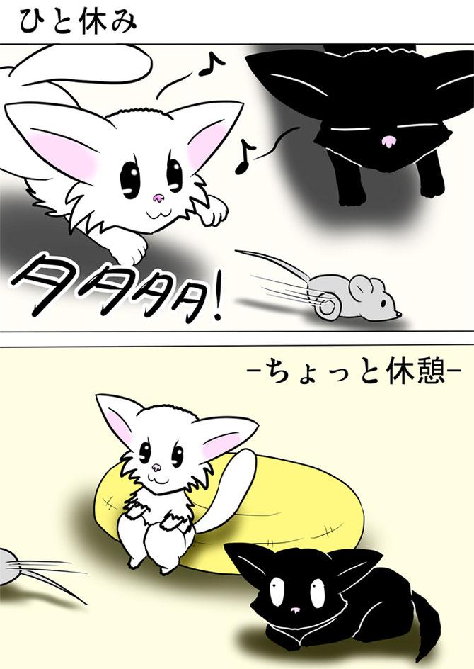 ネズミのおもちゃを追いかけたあとクッションに腰掛けて休む白猫