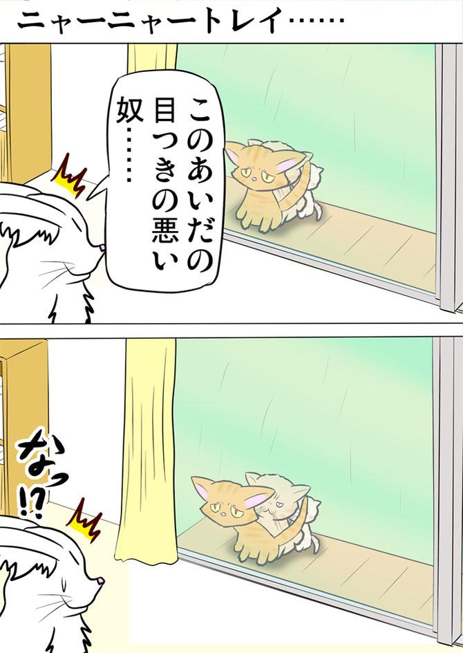 窓の外で並ぶ目つきの悪い猫