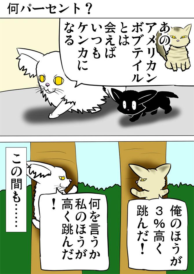 黒猫と話すメインクーン猫