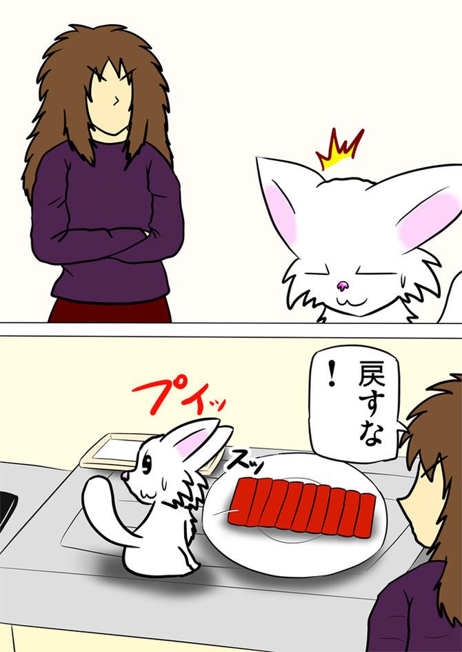 飼い主に盗みが見つかって刺身を元の位置にもどす白猫