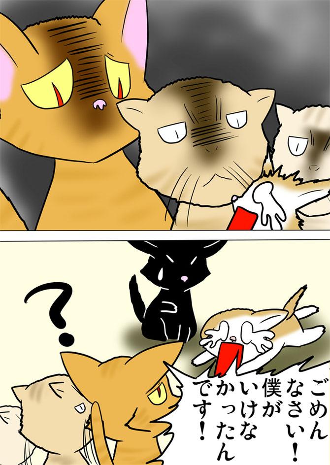 目つきの悪い猫たちの目つきに泣くスコティッシュフォールド猫