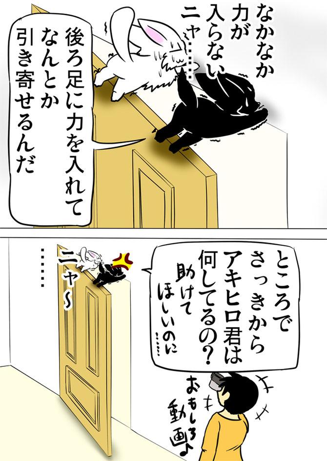 ドアの上で落ちそうになって壁にしがみつく白猫と黒猫をビデオ撮影している少年