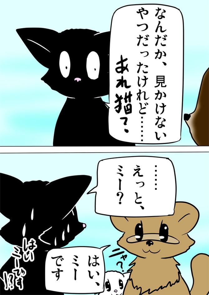 タヌキと対面する黒猫
