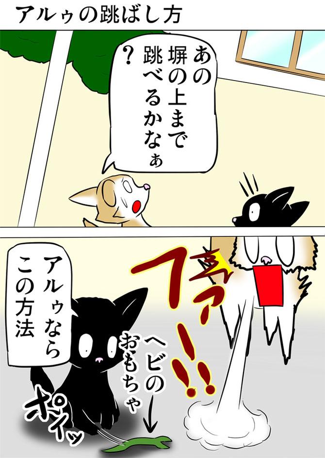 黒猫のだした蛇のおもちゃに驚くスコティッシュフォールド猫