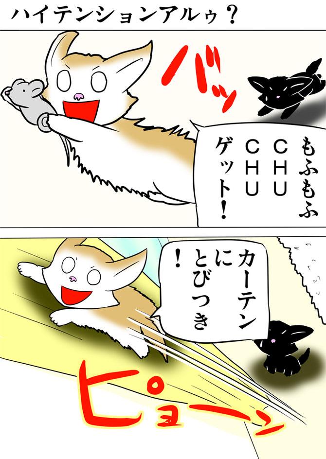 ネズミのおもちゃを捕まえてカーテンにしがみつくアメリカンカール猫