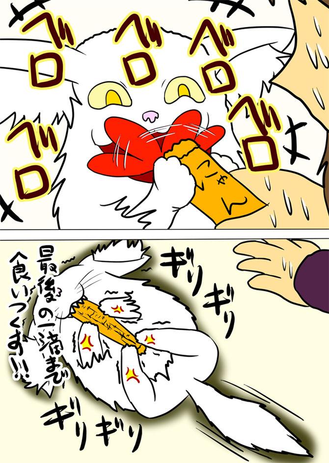 エサをなめまわすメインクーン猫