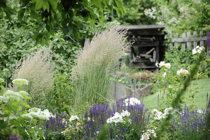 Gekonnte Stauden-und Gräserkombinationen für Ihren Garten