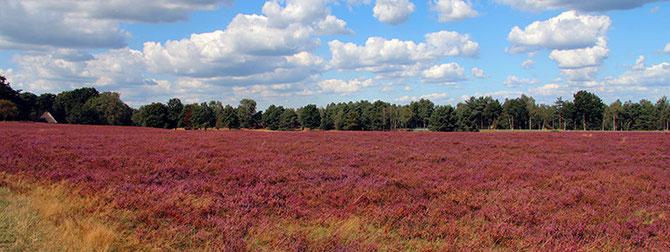 Lüneburger Heide | Urlaub August 2014