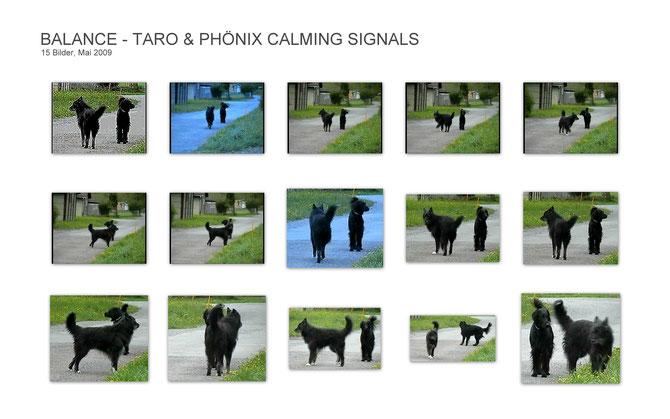 Ausdrucksverhalten - Körpersprache der Hunde