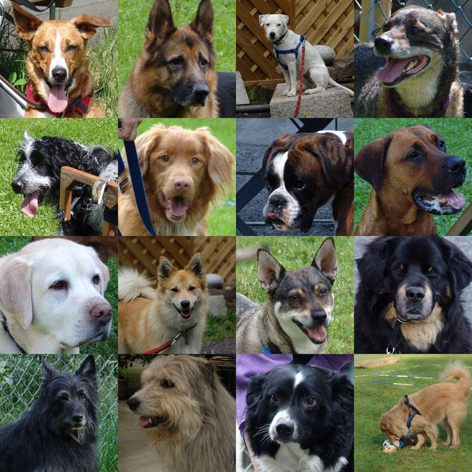Verhaltensberatung & Hundetraining
