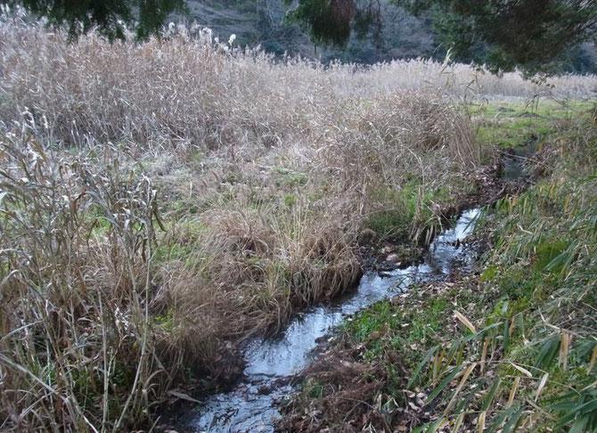 谷戸左岸沿いに自然な流れがある谷戸内風景