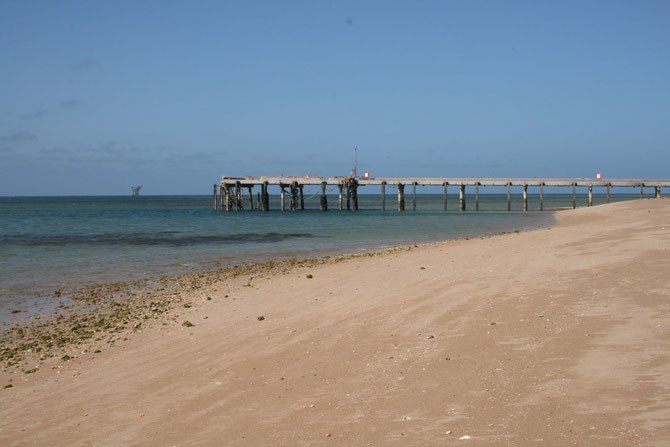 The jetty at Thevenard Island, WA that sheltered predatory fish such as mangrove jack during the day.