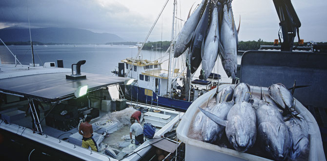 Closing parts of the ocean to fishing displaces fishers to other areas. Tuna image from www.shutterstock.com