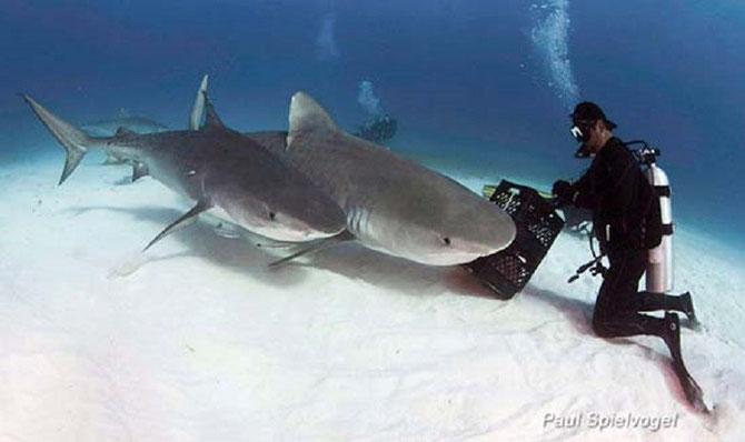 Tiger Sharks, Marine Science basics