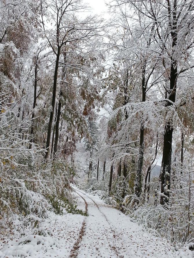 So sah es übrigens letztes Jahr Ende Oktober auf dem Braunenberg aus.