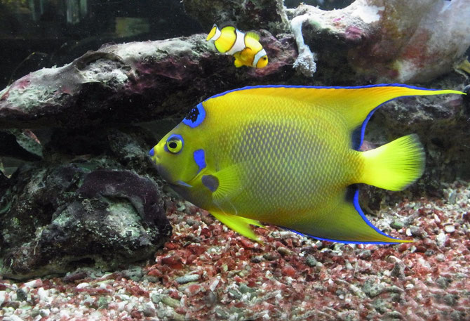 Seewasserfische