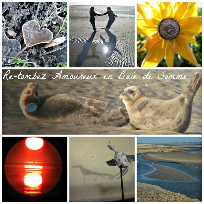 Escapade en amoureux à la découverte de la Baie de Somme: sortie nature, traversée de la Baie et observer les phoques et les oiseaux