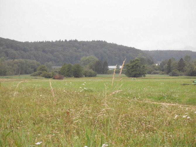 Naturschutzgebiet Mindelsee