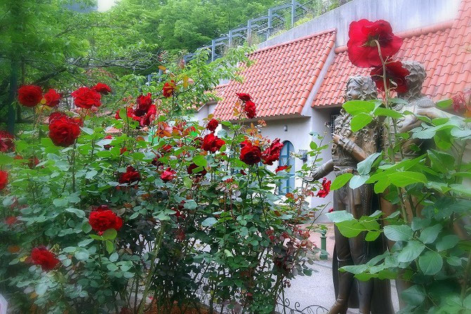 宝塚「花の道」のオスカルとアンドレ像の周りに咲く、深紅のベルサイユのばら。満開です。