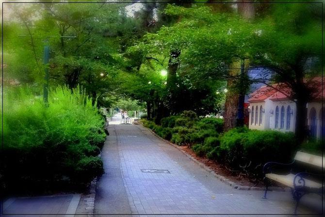 緑の中の宝塚花の道。