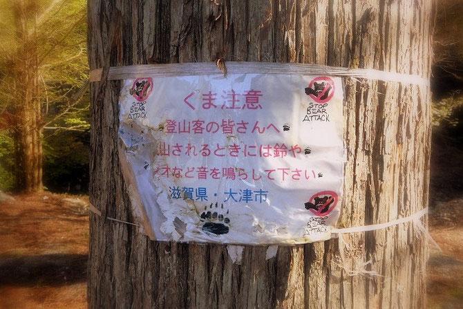 登山客のための注意書き「くま注意」。あちらこちらの木の幹に張られています。